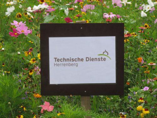 Herrenberg Blumenwiesen