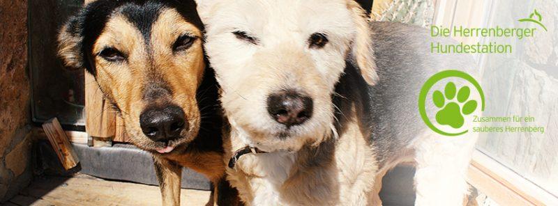 Viel Zuspruch für die Hundestationen