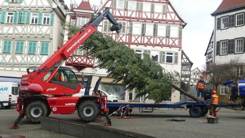 Aktion Weihnachtsbäume