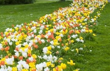 Kunterbunte Frühlingsboten