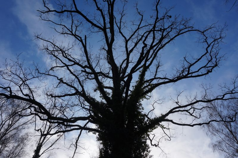 """""""Mein Freund der Baum…"""""""