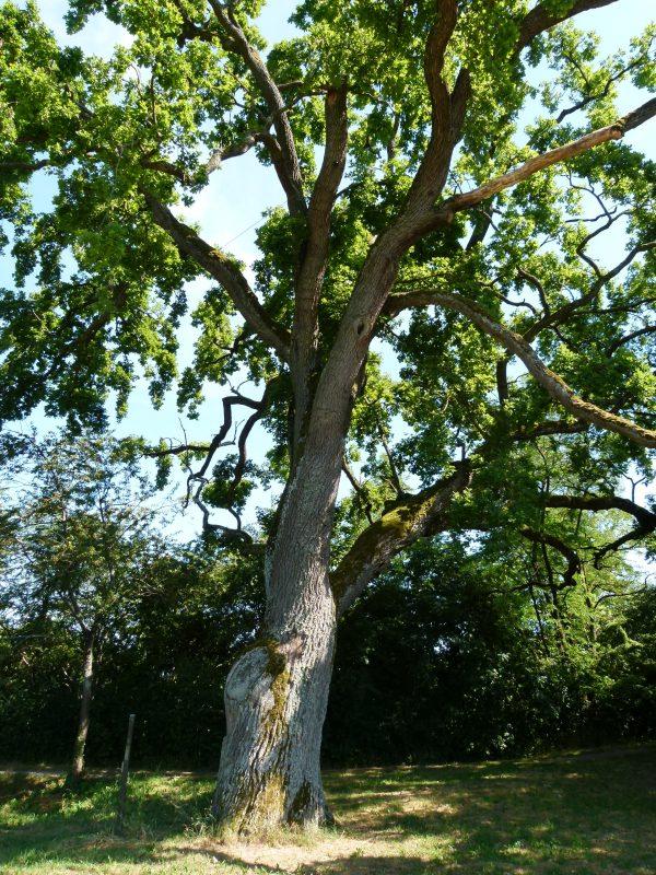 Herrenberger Stadtbäume