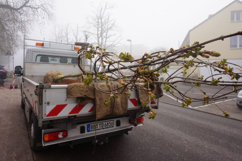 Baumlieferung frei Haus
